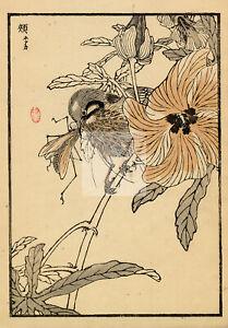 ANTIQUE Original Kono Bairei Woodblock Asian Art Print 1881 Bird Eating #D961