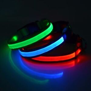 Zuce Paisley Paws Super Bright LED Dog Collars