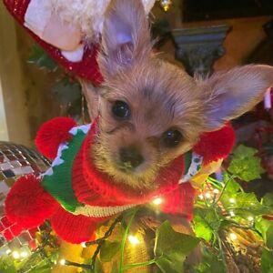 CHRISTMAS JUMPER PET DOG OR CAT COSTUME SIZES XXSMALL / SMALL / MEDIUM / LARGE