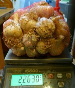 2 lb Small Organic Russian Red Garlic Bulbs grown Organically 2021 in WV