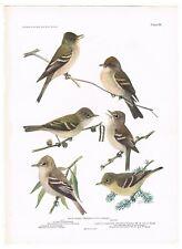 "1936 Vintage FUERTES BIRDS #105 /""WOOD THRUSH HERMIT/"" Color Plate Lithograph"