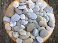 60 beach stones, sea shells rocks, ocean crafts