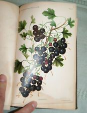 1889 FIRST REPORT SECRETARY OF AGRICULTURE USA Color Plates Fruit Plants Animal