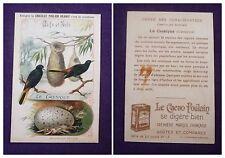 CARTE IMAGE CHROMO RECLAME CHOCOLAT POULAIN ORANGE N°13 LE CASSIQUE