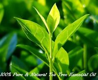 Natural Tea Tree Essential Oil 100ml Free Shipping