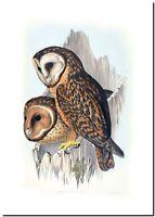 """Vintage John Gould Australian Bird Art CANVAS PRINT~ Masked Owl 24""""X18"""""""