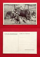 AK Zirkus um 1930 Circus Rebernigg Löwen mit Tierpfleger    ( 53528