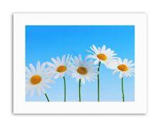 DAISY FLOWERS BLUE WHITE PHOTO Poster Picture Canvas art Prints