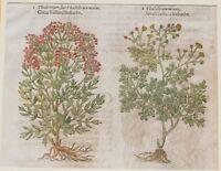 JOHN GERARD BOTANICA MATTHIOLI 1597 THALIETRUM SIVE THALICTRUM