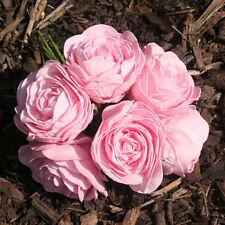 Peony 10-50 Wedding Flowers, Petals & Garlands