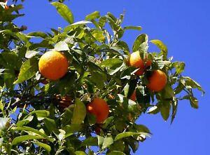 Arancione Acqua Floreale 250ml