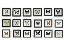 50 MOUNTED REAL BUTTERFLY FRAMED INSECTS TAXIDERMY Mixed Butterfly Collection