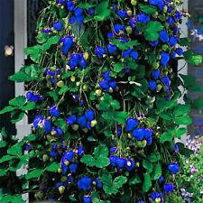 500Pcs Blue Strawberry Rare Fruit Vegetable Seeds Bonsai Edible Garden Climbing