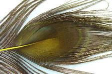 1 x Oeil de PAON JAUNE pour QUILL EBARBE montage mouche fly tying peacock pavo