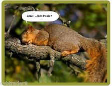 Funny Squirrel Sleeping  Refrigerator / Tool Box / File Cabinet / Magnet