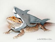 shark outfit, lizard, bearded dragon, small animal clothing