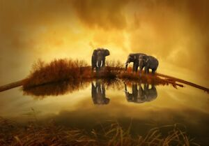 Thailand Elephant Print poster Gloss quality painting print 250GSM A4