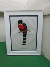 "Framed Lithograph Print, Mr Gould's Tropical Birds, 1955 ""Trogon Mexicanus"""