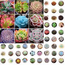 400pcs Mixed Succulent Seeds Succulents Living Stones Plants Cactus Home Plant