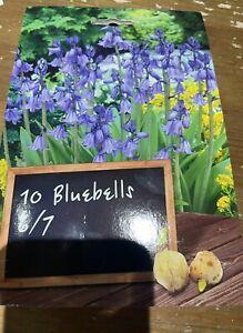 10x Bluebell Bulbs Spring Flowering Blue Autumn Planting