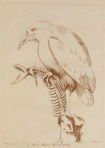 1736 Antique 18thC CHARLES KNAPTON Etching Raven Bird & Fish aft 16thC Udine