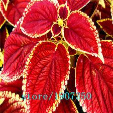 Autumn Partial Shade Evergreen Seeds & Bulbs