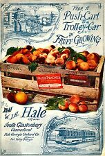 Botanical Poster Hales Peaches Fruit Kitchen wall hangings Poster Print A4