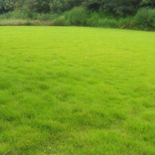 10000x Tall Fescue Green Grass Seed Festuca Arundinacea Lawn Field Turf Seeds #