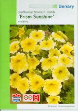 Ein- & Zweijährige Pflanzen-Samen Blühende Petunia