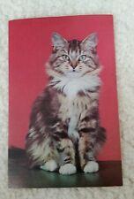 ALFRED MAINZER BEAUTIFUL BROWN BLACK TAN & WHITE TABBY CAT POSTCARD #803 C15645