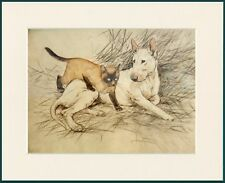 ENGLISH BULL TERRIER AND SIAMESE CAT LOVELY DOG PRINT MOUNTED READY TO FRAME