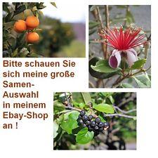 Exot Pflanzen Samen Saatgut exotische Zimmerpflanze MANDARINE, ARONIA + ANANAS