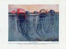 c1900 MARINE JELLYFISH POLYP PORTUGUESE MAN OF WAR Antique Litho Print W.Bolsche