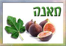 100 Fig Seeds Ficus  Sweet Fresh Organic From Jerusalem  Israel Carica Moraceae