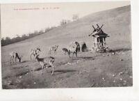 Mikasayama Nara Japan Vintage Postcard 304b