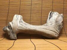 """Beautiful 16"""" DRIFTWOOD Terrarium Taxidermy Aquarium Art Reptile Wood DECOR"""