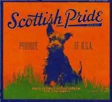 Pico Scottish Terrier Puppy Dog Pride Orange Citrus Fruit Crate Label Art Print