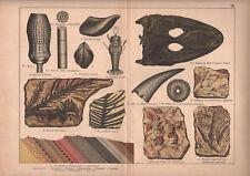 1878 lithographie originale fossiles mastodonte plante géologie