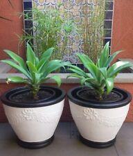 Pair of vintage mid century concrete garden plant pots planters