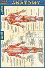 ANATOMY QUICK REFERENCE GUIDE - BARCHARTS, INC. (COR) - NEW PAPERBACK BOOK