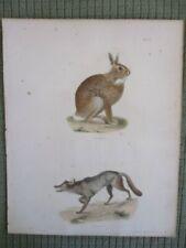 Vintage Print,American Grey Rabbit,Wolf,Mammals Natural History of Ny,1842