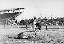 New Art Print 1915 Photo Real Cowgirl Mabel Strickland Roping Steer Rodeo 11X17