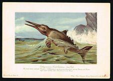Ichtyosaurus, Extinct Prehistoric Marine Reptile, Antique Print - F.John 1900