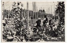 Social History; Hop Picking, The Hop Gardens & Oast Houses RP PPC, 1960 PMK