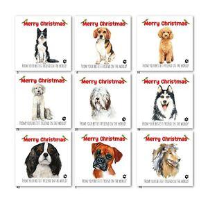 CHRISTMAS CARD FROM THE DOG-BORDER COLLIE-BEAGLE-COCKAPOO-BOXER-HUSKIE-SHEEPDOG