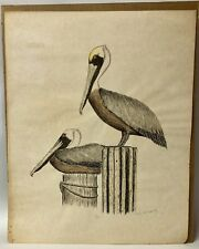 Vintage 1976 Jean Jannopoulo Pelican Print Numbered & Signed Litho 85/200