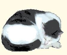 BN original cross stitch  chart of a black and white cat  3