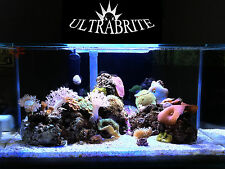 Custom Fluval Edge UltraBrite Reef LED System W/optional Automated Controllers