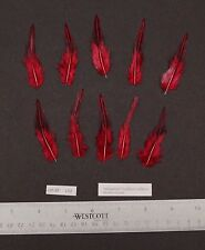 """Ten 2.5"""" to 2.75"""" Claret/Red Grey Jungle Fowl Cock Hackle Feathers Fly Tying"""