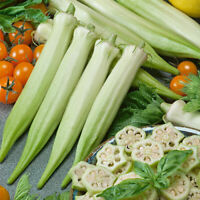 Details about  /Cajun King Okra Seed